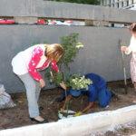Nova ação de plantio de árvores é realizada no Fórum Clóvis Beviláqua